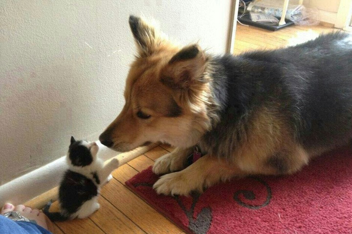Cat Sitting On Dog Gif